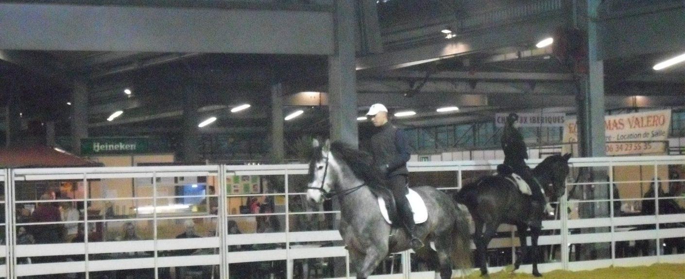 Montpellier equisud le parc des expositions sur ses grands chevaux - Salon du cheval montpellier ...